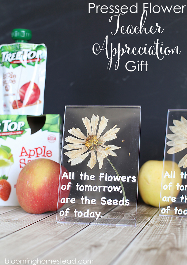 DIY-Teacher-Appreciation-Gift-Idea